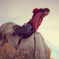 поле  серой  лошади :: Дмитрий Потапов
