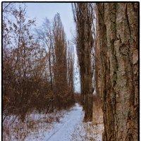 В путь дорожку :: Denis Aksenov