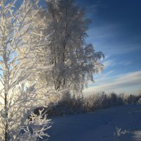 дерева мои, дерева :: liudmila drake