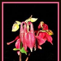 Цветы тоже спят :: Владимир Хатмулин