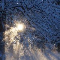 Зимний день :: Валерия заноска