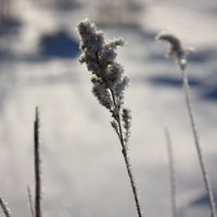 Замерза-аем... :: Владимир Буравкин