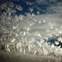Рождественские узоры, автор фото моя мама)) :: Марина Метелева