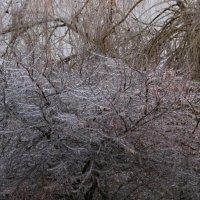 Хрустальное дерево :: Диана С