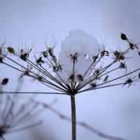 И зимой цветы цветут! :: Серый Волк