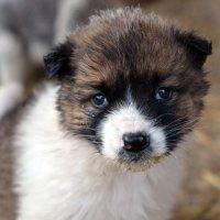 Dog :: Vera Baksheeva