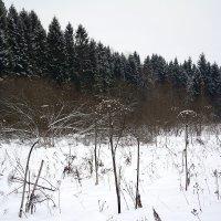 Зима в зените :: Юрий Митенёв