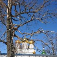 голое дерево :: Евгения Копейкина