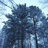 Зеленогорск 2012 :: Роман Овечкин
