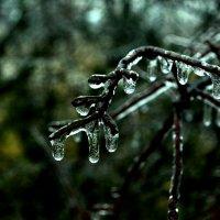 Ледяной дождь :: Анастасия Трунова