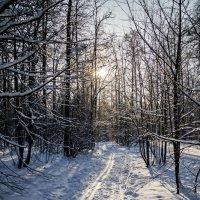 Лыжня :: Сергей Басов