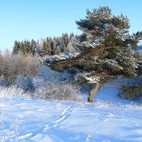 зима :: александр пеньков