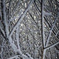 Матрица природы :: Андрей Дыдыкин