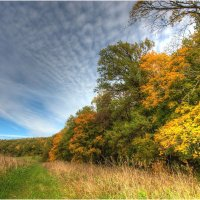 Осень на опушке леса. :: Nikita Volkov