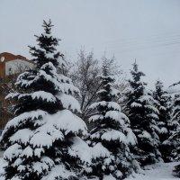 Ёлочки городские. :: Ольга Кривых
