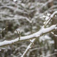 Веточка в снегу :: Екатерина Малащенкова