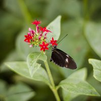 Бабочка и цветок :: Светлана Белова (Груздева)