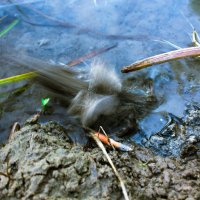 Лягушка в прыжке :: Григорий Никитин