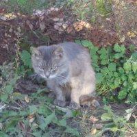 Серый котик :: Татьяна Рудникова