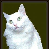 В   память о кошке Бусе :: Владимир Хатмулин