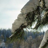 Под снежным одеялом :: Андрей Мирошниченко