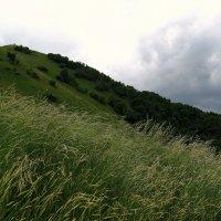 Травы не успели от росы серебряной прогнуться... :: ФотоЛюбка *