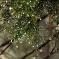 Зимняя капель... :: ФотоЛюбка *