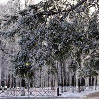 про зиму :: Нина Алексеева