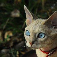 Что за кот? :: Игорь Юрьев