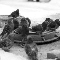 стая голубей :: юрий мотырев