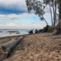 Финский залив :: андрей мазиков