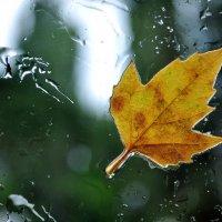 Осень :: Светлана Тимченко