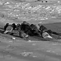 Холод :: Женя Ахмедзянов