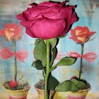 Розы :: Виктория Чурилова