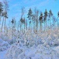 Зимний лес :: Аркадий Алямовский