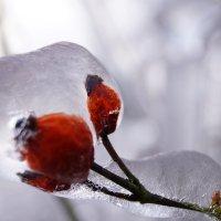 Ледяная сказка :: Мария Авдонина