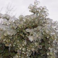Творение дождя в январе :: Мария Авдонина