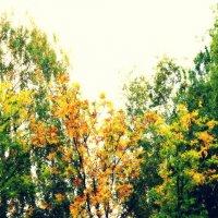 Осень,сентябрь 2013 :: Ольга Bilyk