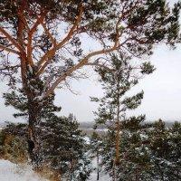 Зимний лес :: Татьяна Т