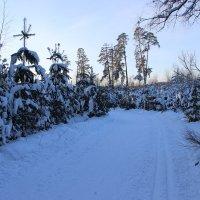 зима :: Ильмира Хафизова
