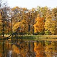 Осень :: Наталия Короткова