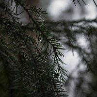 В лесу... :: Любовь Анищенко