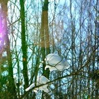 в лесу :: Мария Береговая
