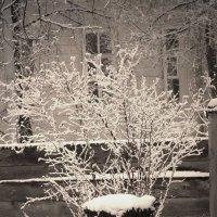 зимний  цвет :: Дмитрий Потапов
