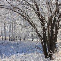 Зимний пейзаж. :: Наталья Юрова