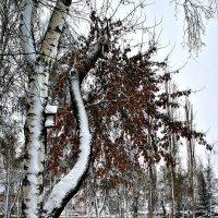 В парке :: Евгений Юрков