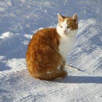 Рыжая на снегу :: esadesign Егерев
