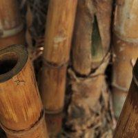 у кого то теперь бамбуковая флейта... :: Сергей