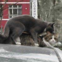 Коты :: Алексей Панов