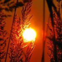 закт солнца :: Алексей -